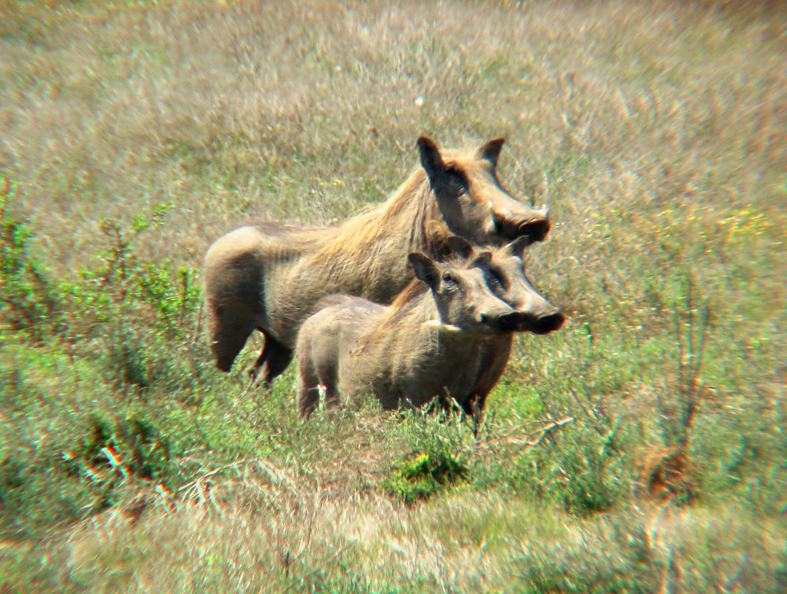 Sweet Dogs Wallpaper Warthog Wallpapers | F...