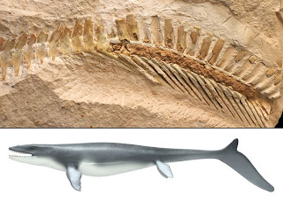 new-species-ancient-lizard-swims-like-sharks