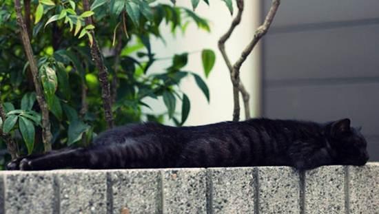 kucing-tidur-atas-tembok