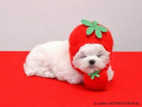Cute Dogs 3