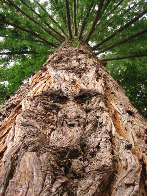 اشجار غريبة ومرعبة في العالم Trees, strange and terrifying in the world  Human_Shape_Strange_and_funny_Tree+%252818%2529