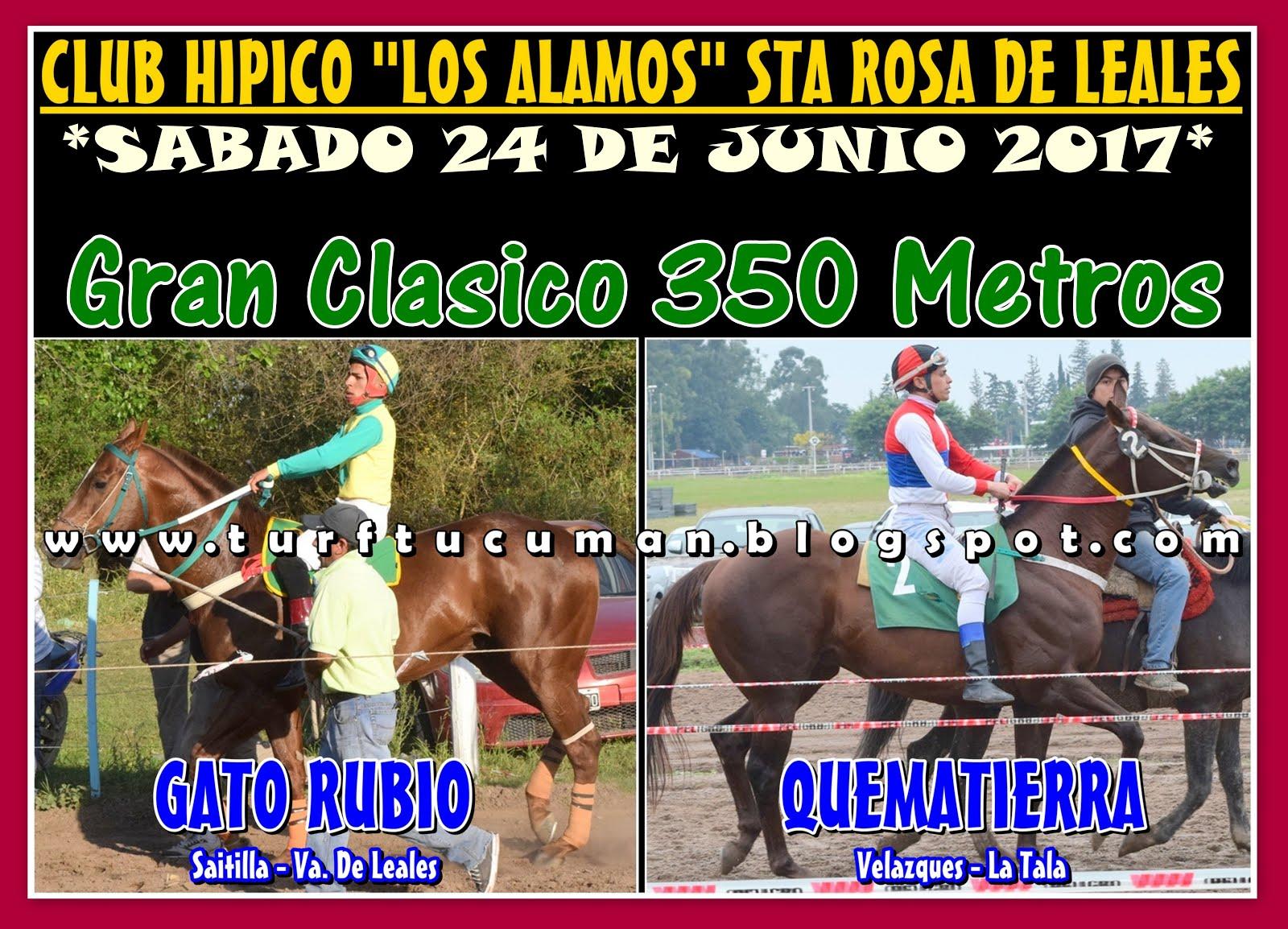 GATO RUBIO VS QUEMATIERRA