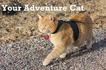 Have a Safe Adventure with your Cat