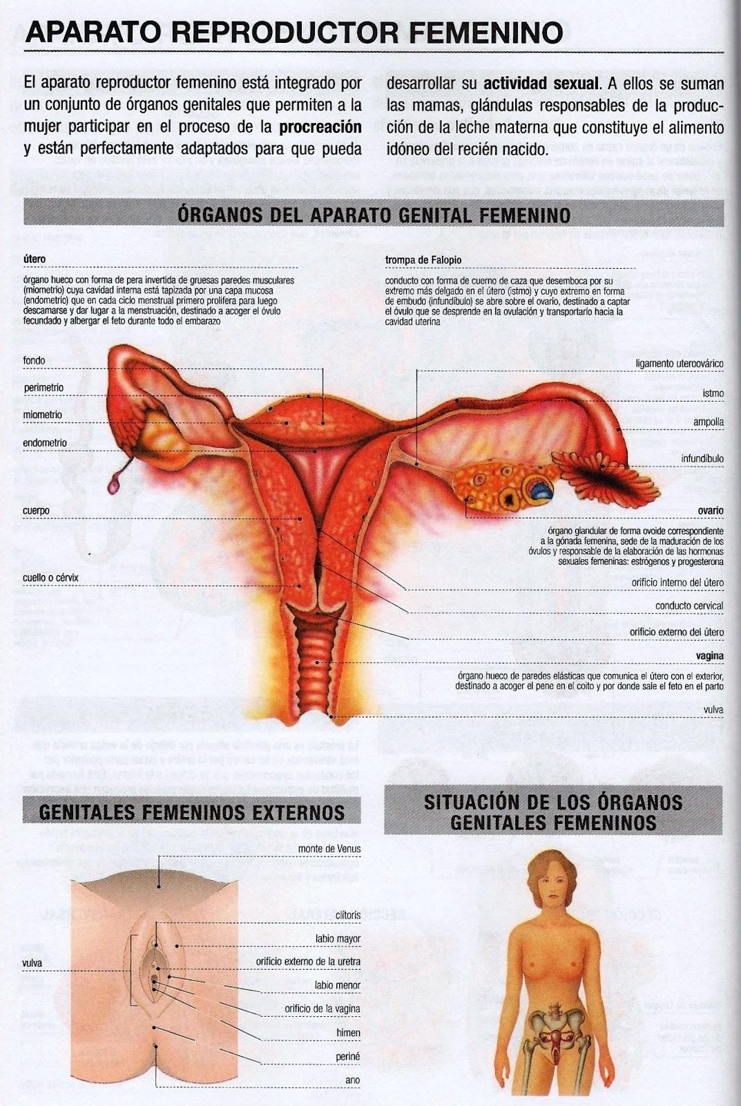 ANATOMIA. APARATO REPRODUCTOR MASCULINO Y FEMENINO. PERCY ZAPATA MENDO.