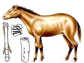 Merychippus | fossil mammal genus | Britannica.com