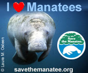 Manatees!
