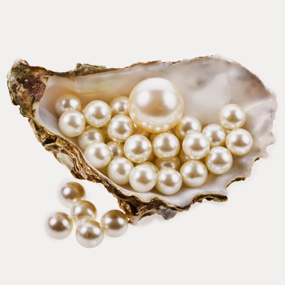 tuckers shuckers how do oysters make pearls