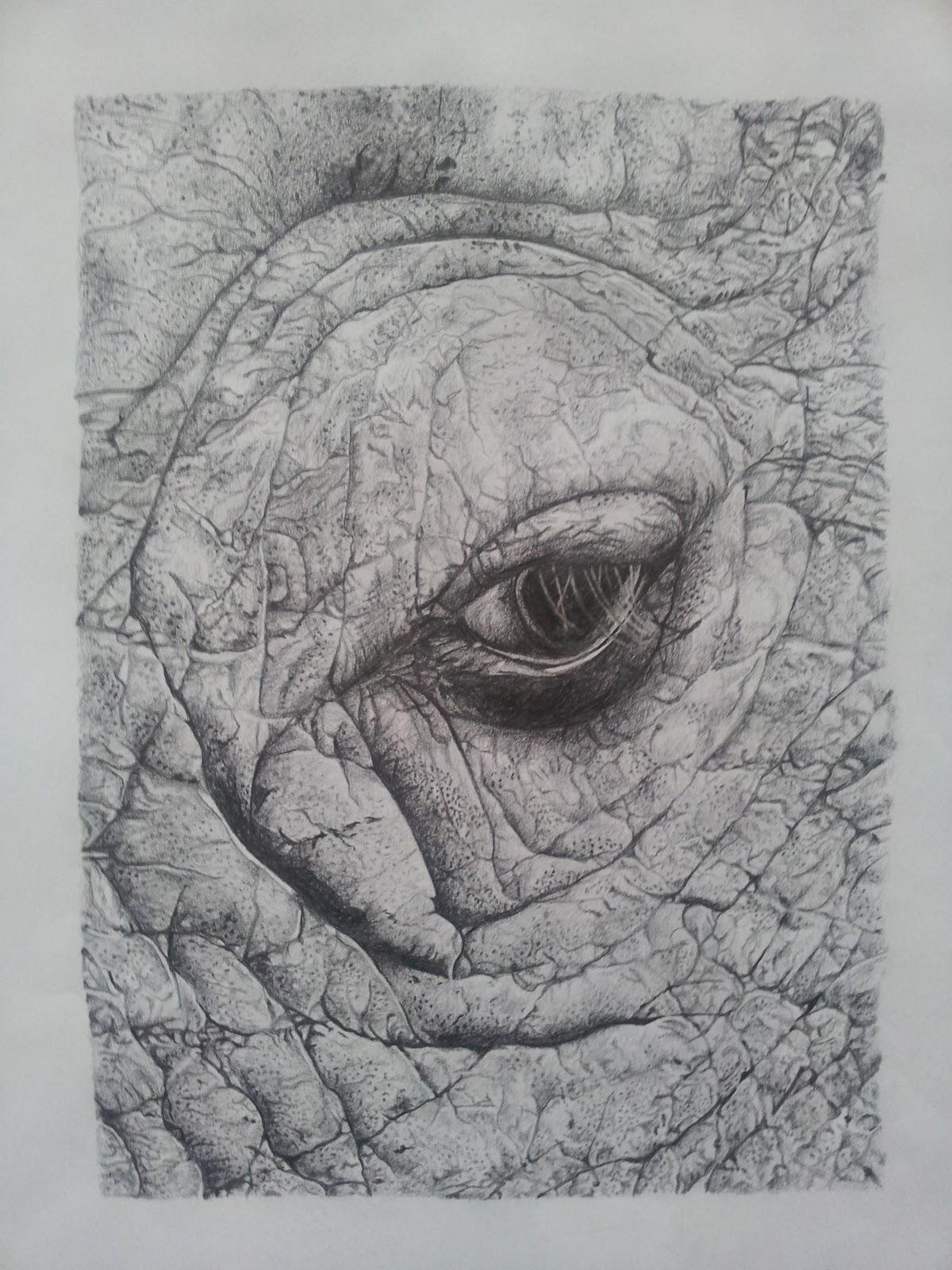 Elephant Eyes Drawing