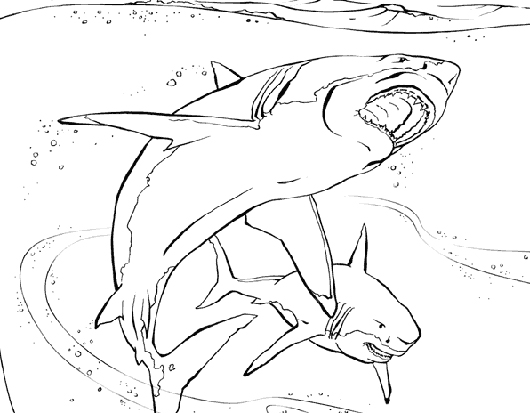 Sharks drawing to color title=