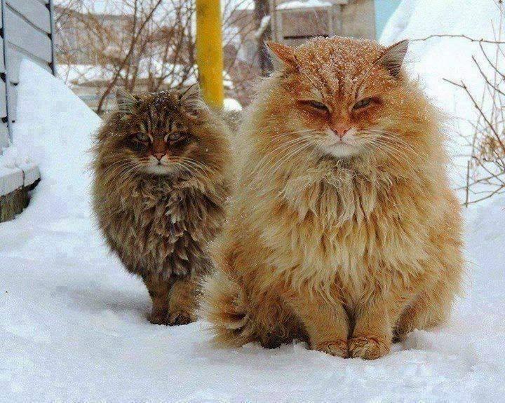 All psy une psy votre coute le chat le r ve et le - Symbolique du chat ...