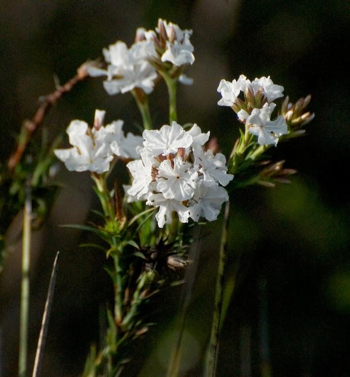'paper flower'