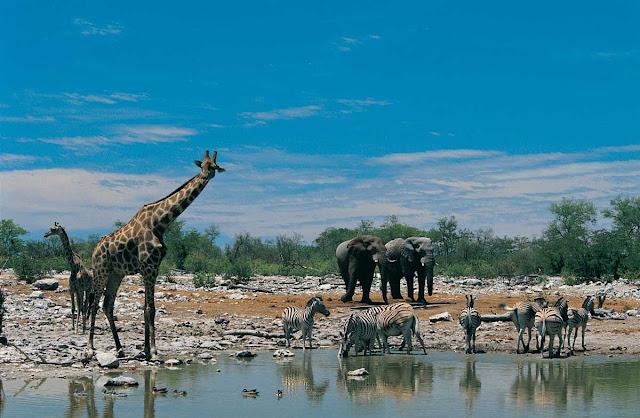 Africa Safari Wildlife