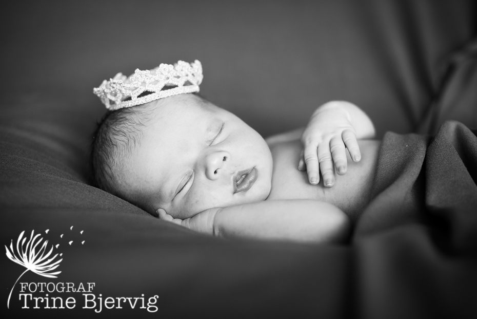 En liten nyfødt prins fra Tønsberg - nyfødtfotografering av fotograf Trine Bjervig