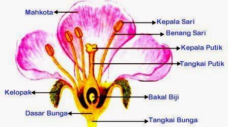 Bunga : Bagian-Bagian Bunga dan Fungsinya