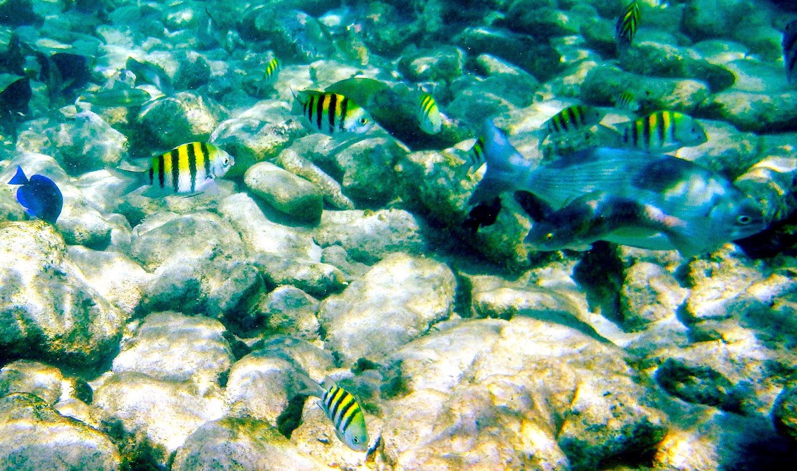 Baby-Beach-San Nicolas-Snorkeling-Aruba-Travel-The-East