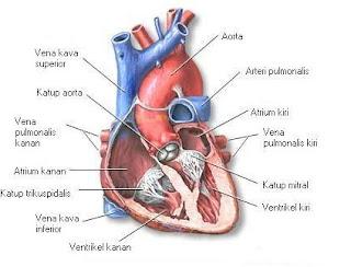 Jantung - Cara Turunkan Berat Badan