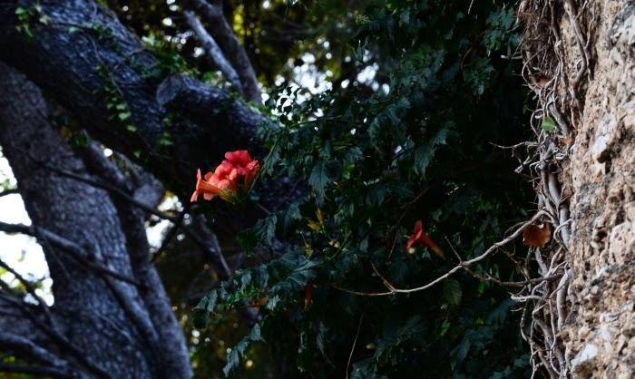 """Фотопроект - авантюра: """"Радуга осени"""". Отчет о оранжевой неделе и старт третьей - желтый"""