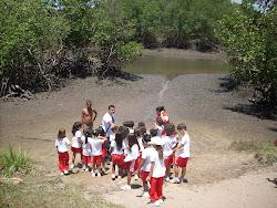 Educação ambiental no manguezal