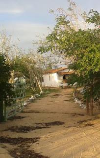 Casal passa momentos de terror nas mãos de assaltantes no município de Nova Palmeira