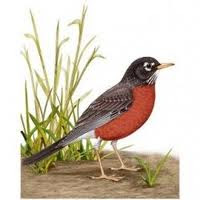 Stay-at-home-round-robin
