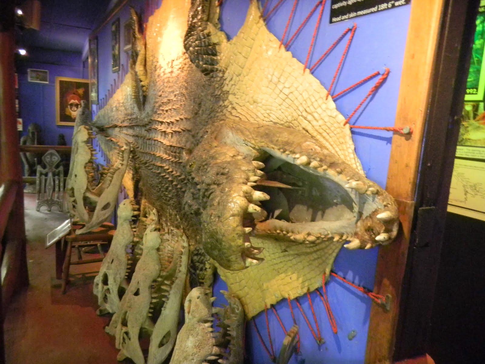 Quão grande pode ser? - Crocodilianos gigantes 770