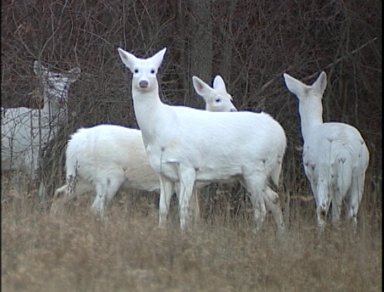 Best   Wallpaper Horse Family - white+animals+wallpaper+4  Collection_913081.jpg