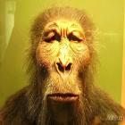 como o ser umano evoluiu? de onde viemos? a quanto tempo o universo existe? como surgiu as teoria da evoluão? confira essas duvidas no vida de meme