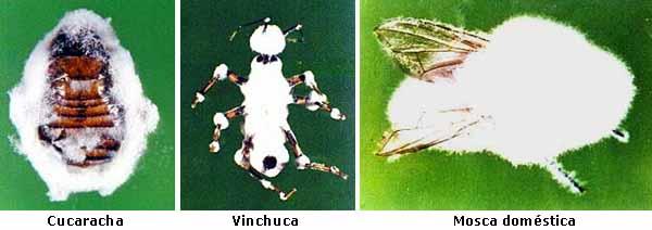 hongos controladores: