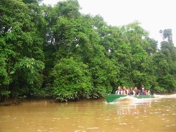 Kinabatangan Floodplain, Sabah