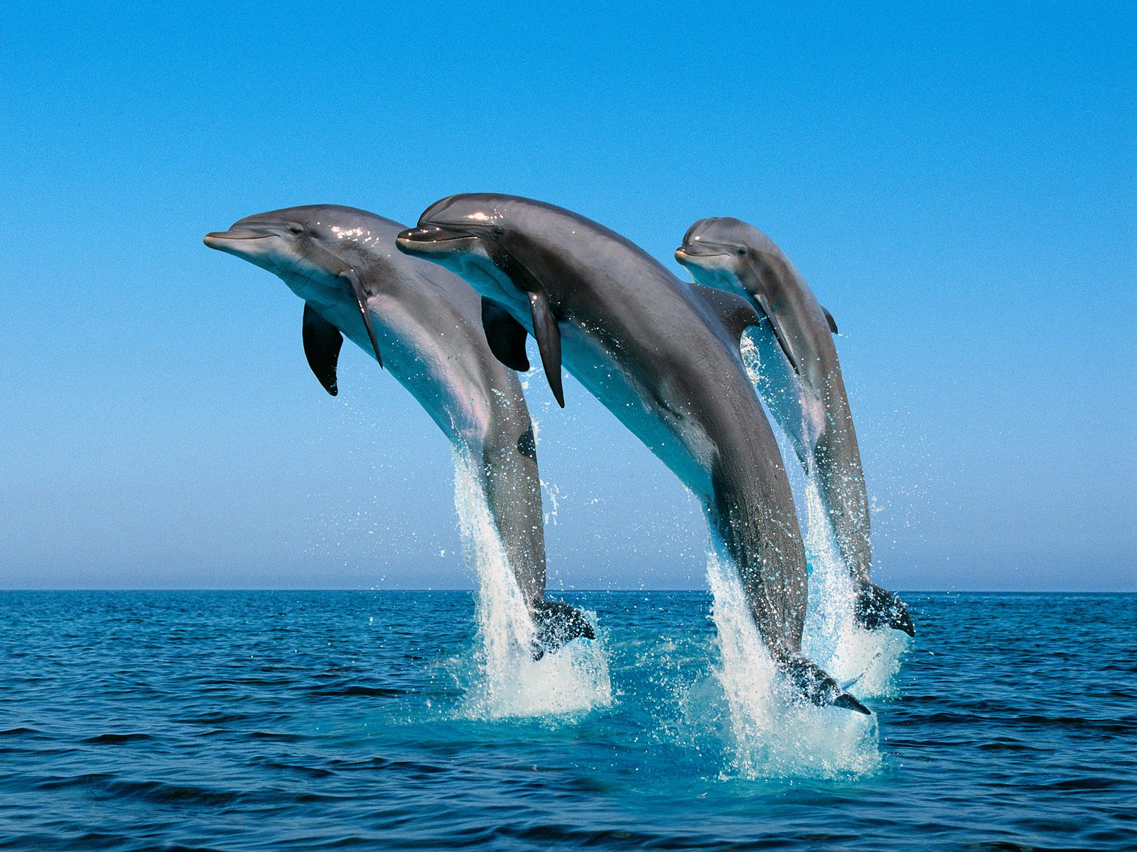 3d wallpapers hd animals - photo #31