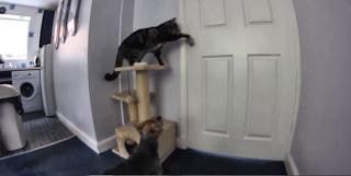 Un gato ayuda a un perro a huir de la cocina