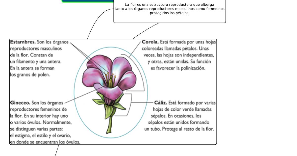 Uso didáctico de las Tic en el plan ceibal: La Flor y sus partes ...