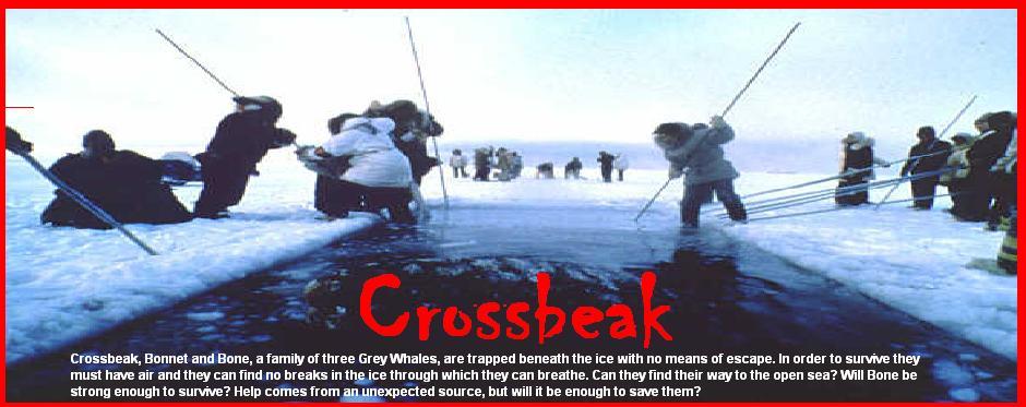 crossbeak