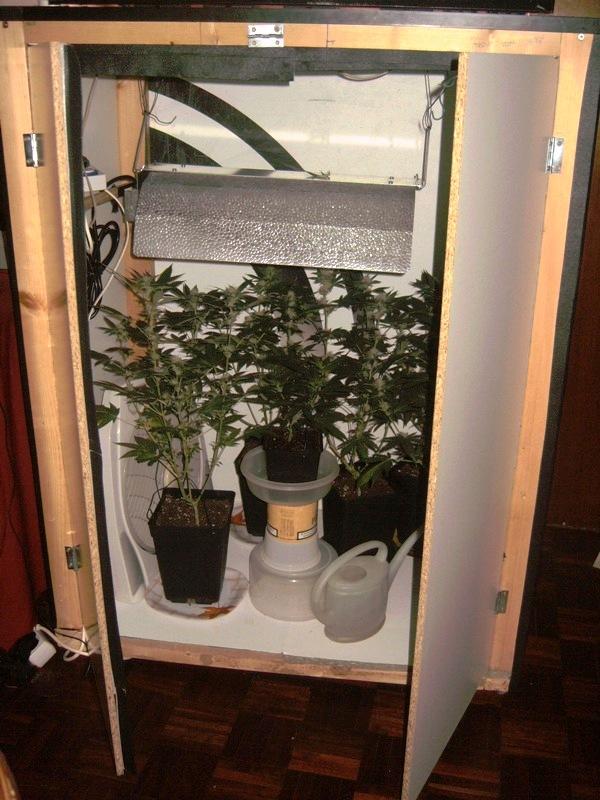 floraciones cfl armario de cultivo casero