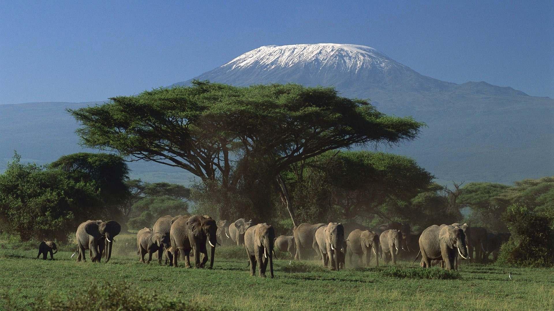 http://4.bp.blogspot.com/-LrdrB_wGC1o/Tum58jOwBqI/AAAAAAAAFqA/ciQGWjrxKcU/s1920/elephant_wallpaper_4.jpg
