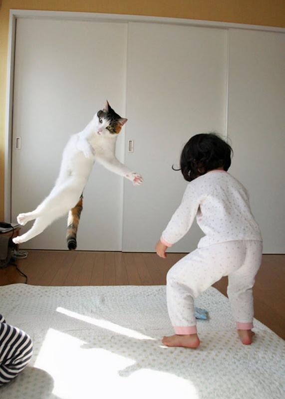Kung Fu kat