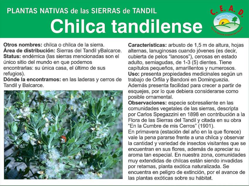 Plantas nativas de las Sierras de Tandil: Fichas