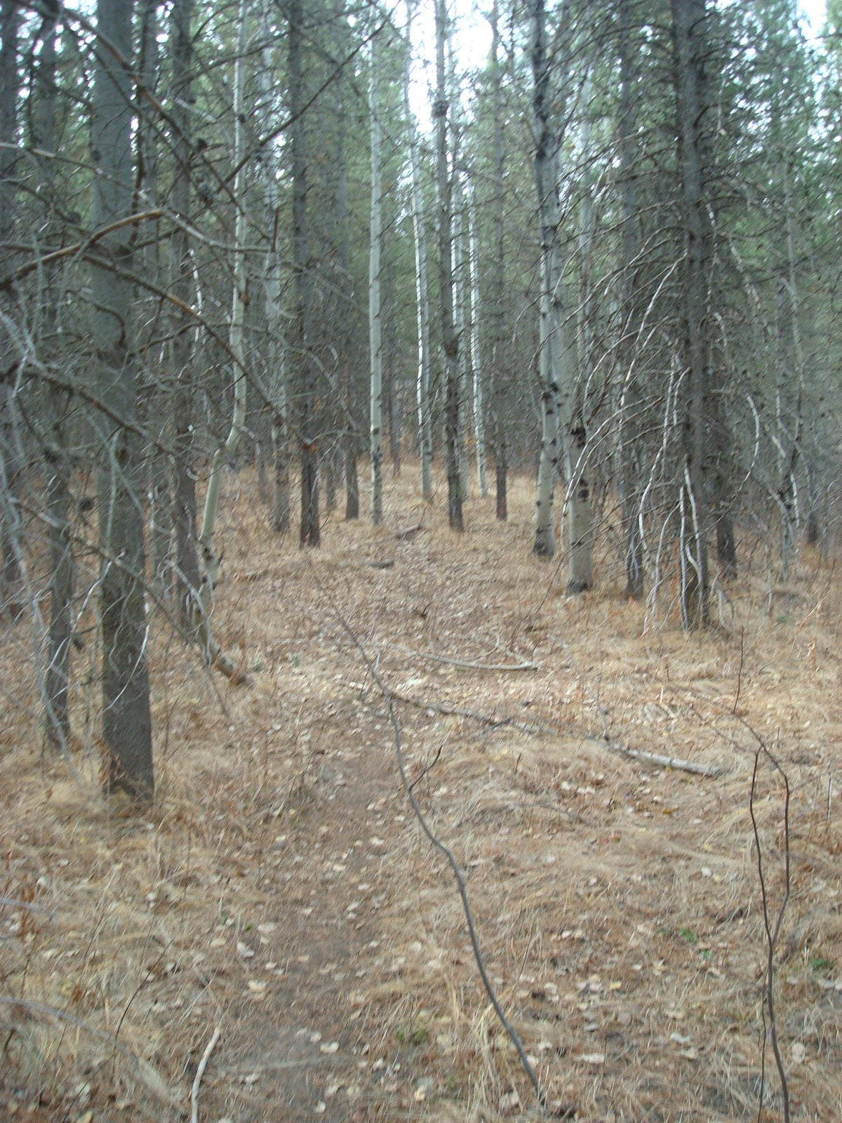 Game Trail in Idaho