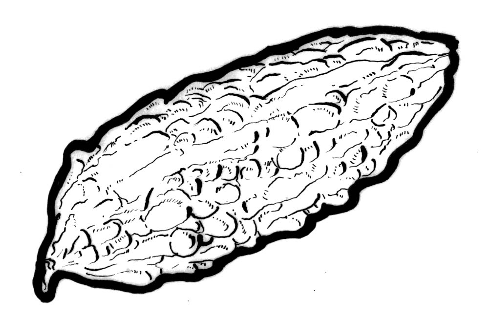 Drawing Lines In Qml : Bitter melon gourd drawing sketch coloring page