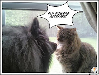 PLN Dog and Cat Collaborate by Flying Off the Shelf
