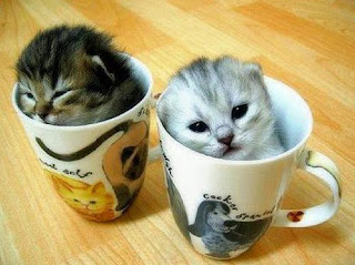 funny cute pet cat kitten pussycat pictures