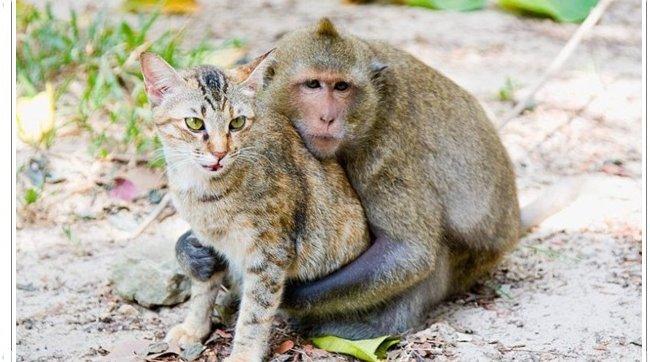 Gambar Kucing Sedang Berdiri 5000 Gambar Kucing Lucu Imut