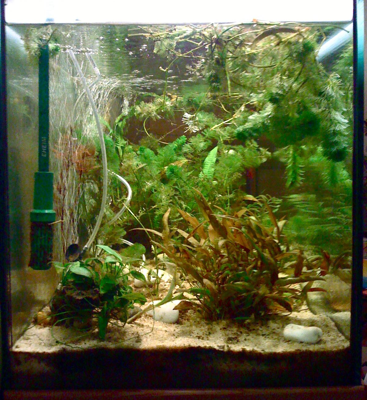 manunews poissons d 39 avril aquariophiles soyons leur coute. Black Bedroom Furniture Sets. Home Design Ideas