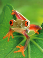 Blog about Frogs