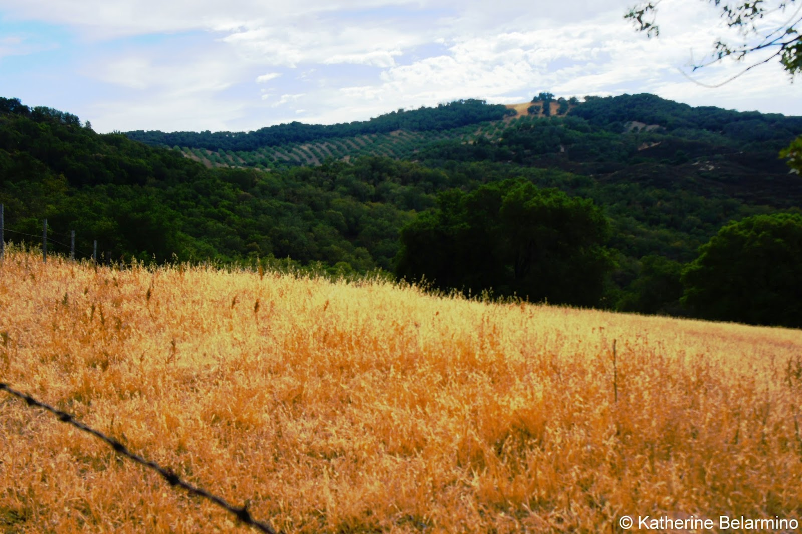 Paso Robles Countryside Dog Friendly Wineries California