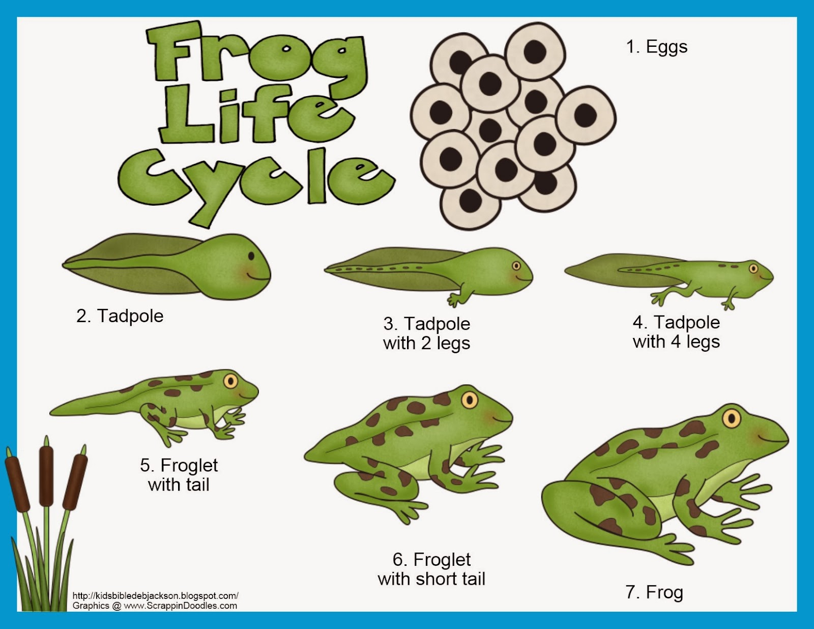 Revered image inside life cycle of a frog printable