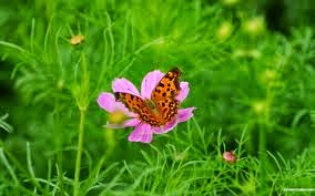 An autumn flower and its butterfly