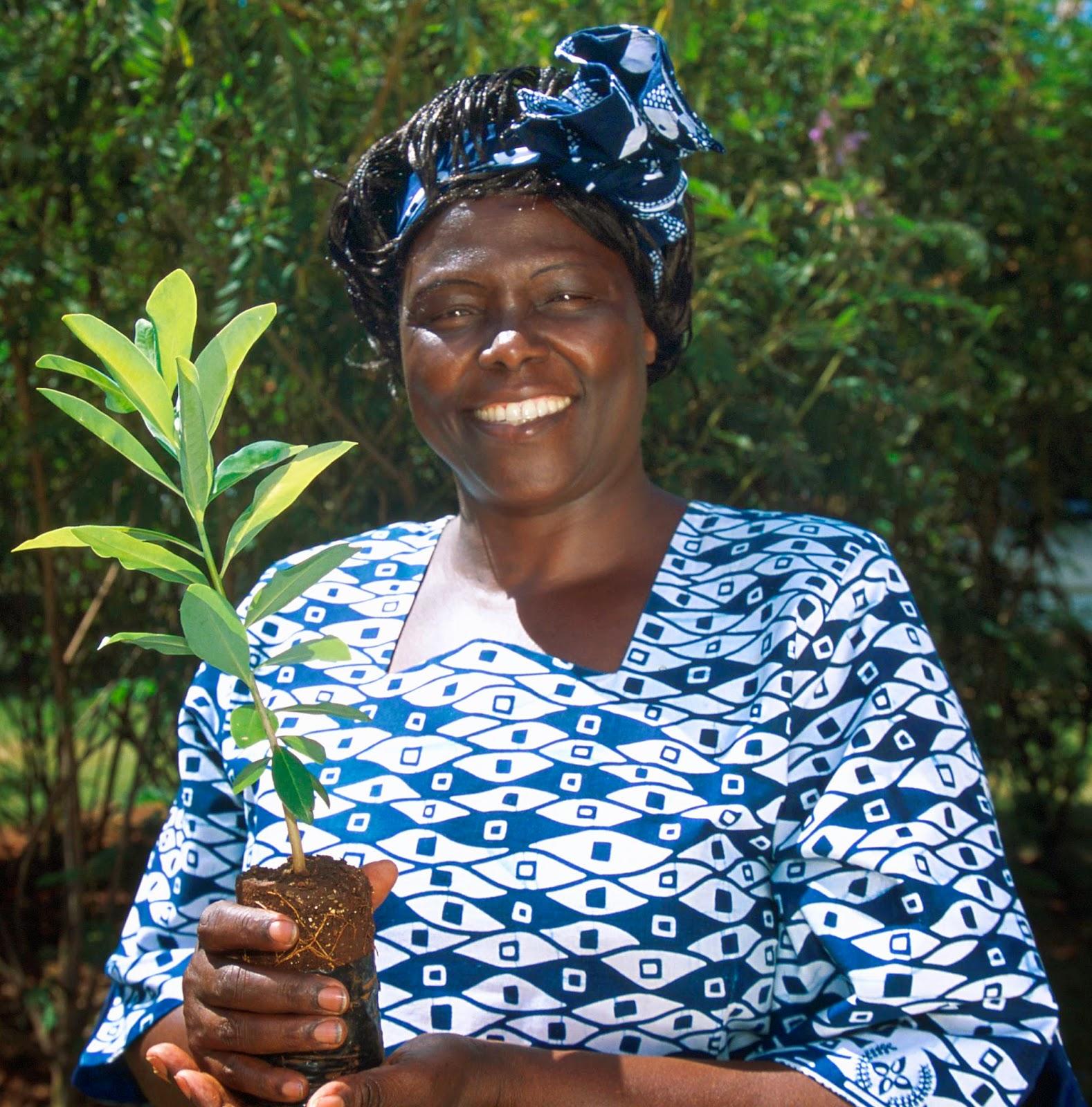 maathai wangari Leben wangari maathai stammte aus einer familie südlich von nairobi, deren vater polygam lebte ihre begabung fiel einigen missionsschwestern auf, und sie erhielt eine solide schulbildung.