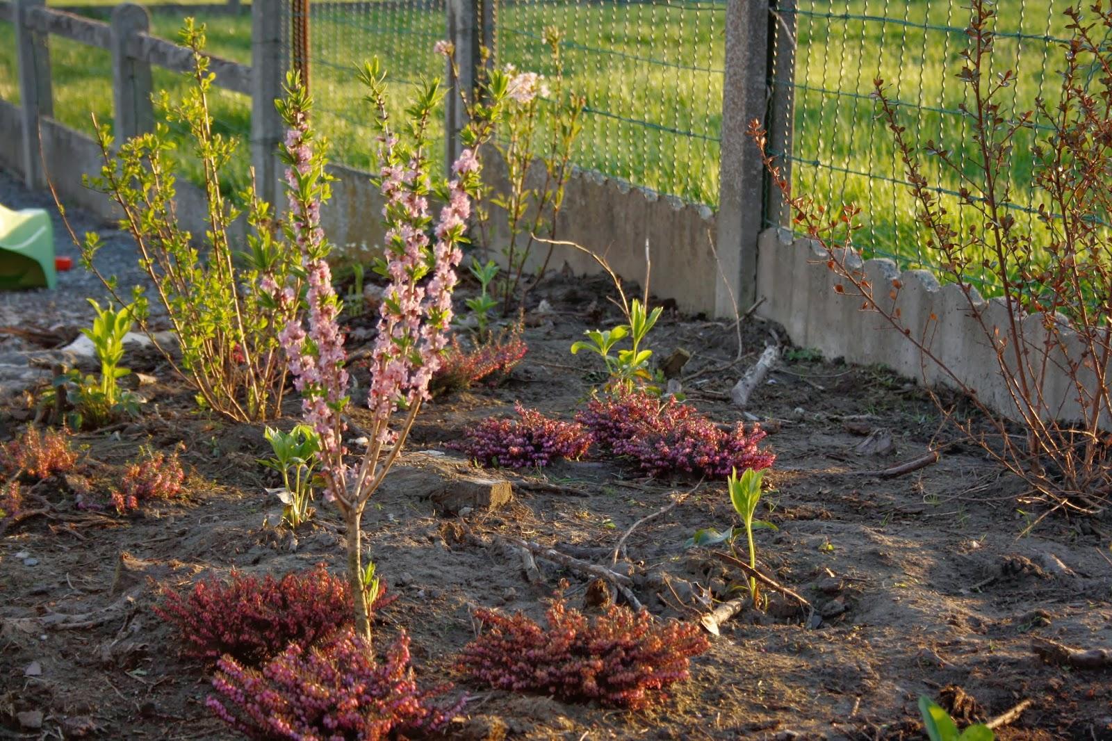 Le jardin en d sordre en avril - Que faire au jardin en avril ...