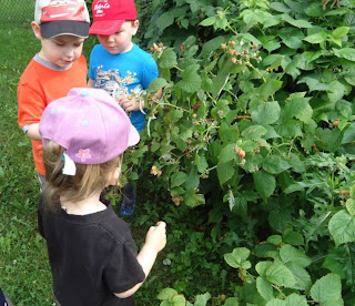 Nature School Education Early Childhood